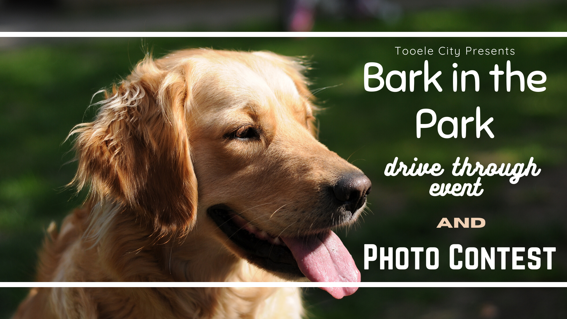 Bark in the Park 2020
