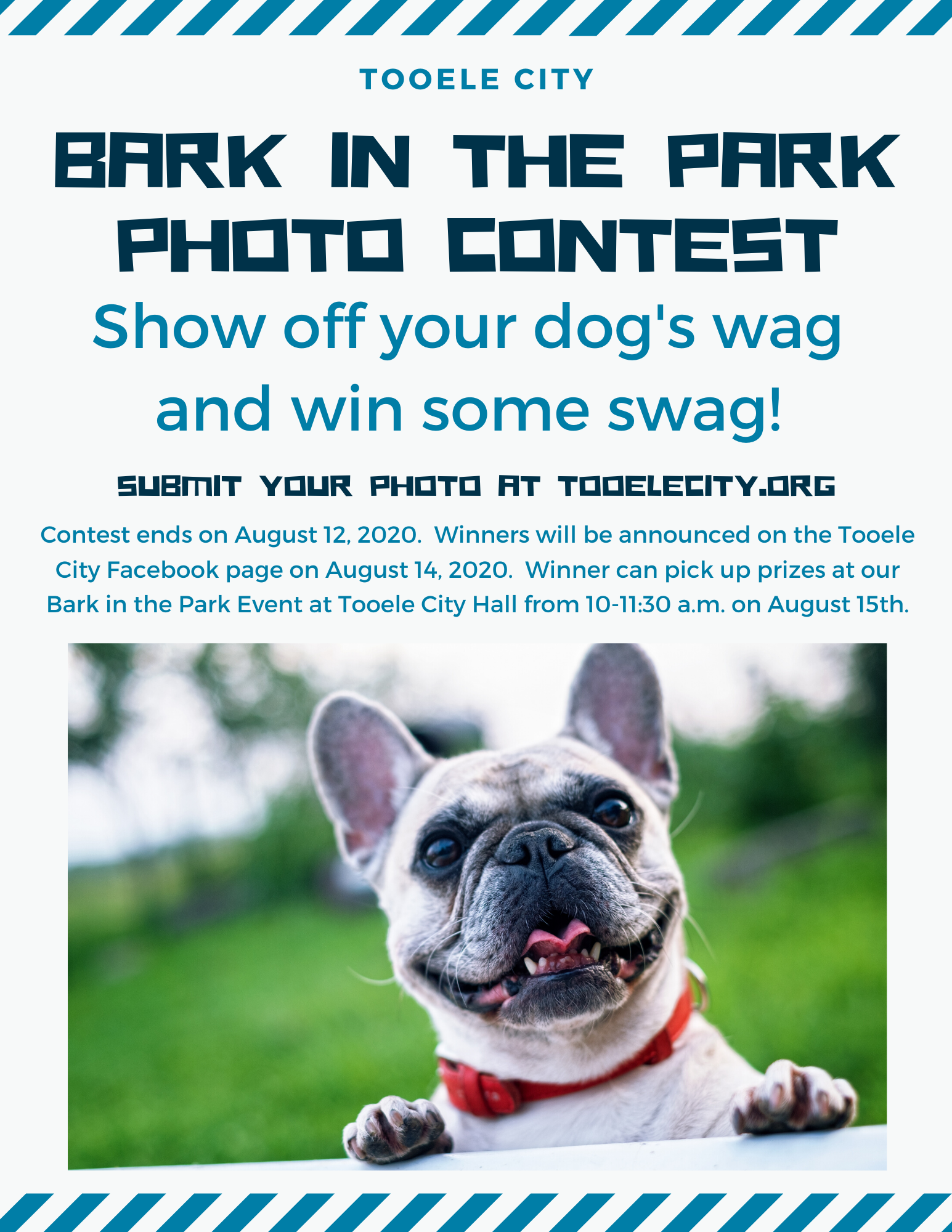 Bark in the Park Photo Contest Flyer